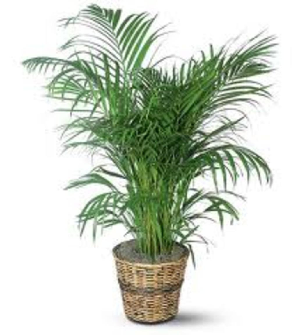 Sur mes envies for Grande plante verte exterieur